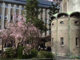 世界平和記念聖堂と桜2-2014.jpg